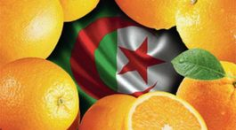 apelsin_-768x489