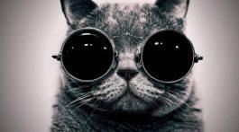 cat_slepoy_-768x480