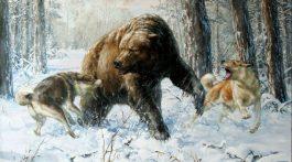 Medved-1-768x500