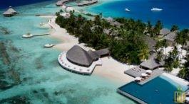 maldivy-768x545
